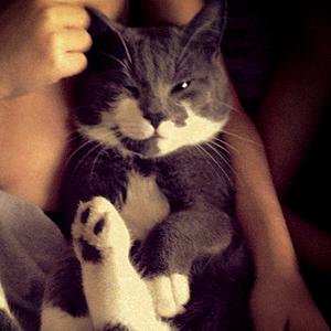 Efterlyst katt - Cocos 130514 Lerum Öxeryd 2 jan 2013