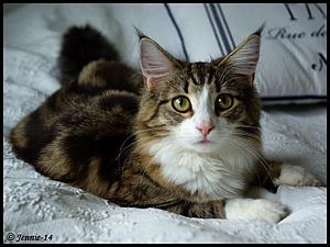 Efterlyst katt - Finess; Toreby mosse, 140601