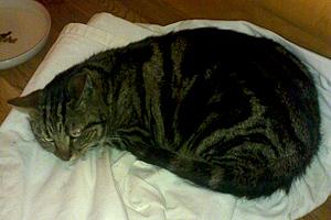 Efterlyst katt - Kitty 130404, Västerlanda, Lilla Edet