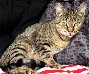 Efterlyst katt - Momo 130418
