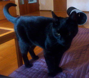 Katt upphittad - 8e juni i Bondegärdet 140613