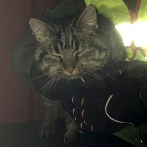 Upphittad katt 130110 - Hålta skola i Kungälvs Kommun