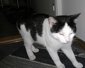 upphittad-katt-hostvadersgatan-9-160917
