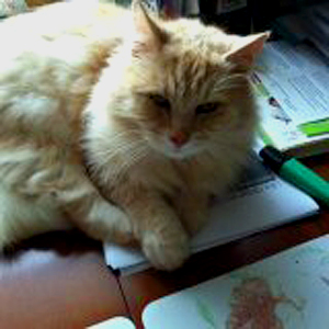 Efterlyst katt - Olle 130102