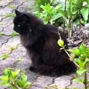 Efterlyst Katt Nossen_130202