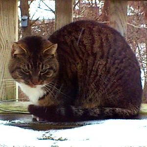 Katt upphittad - Kärrdalen, Hisingen 130216