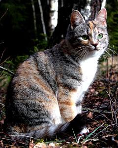 Efterlyst katt - Fröken 130324