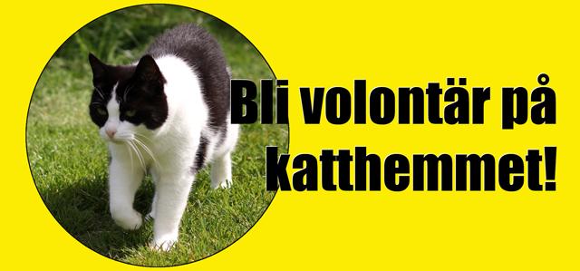 volontär-bild 640x299