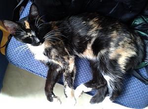 Katt upphittad - Centrala Hisingen, september 2014, 140922
