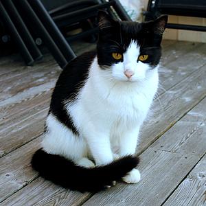 Upphittad katt, Västra Frölunda,140930